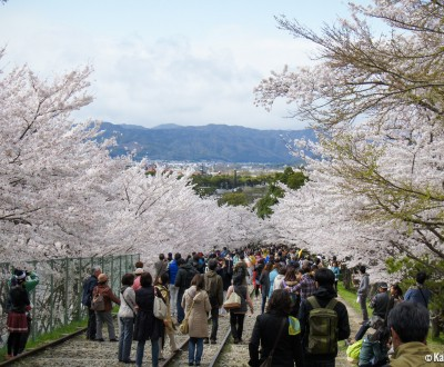 Kyoto Keage Incline Cherry Blossoms