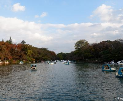Inokashira Park and pond in autumn