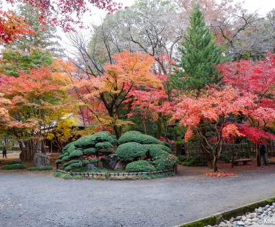 Heirin-ji Temple, Saitama, Red maple trees (momiji)