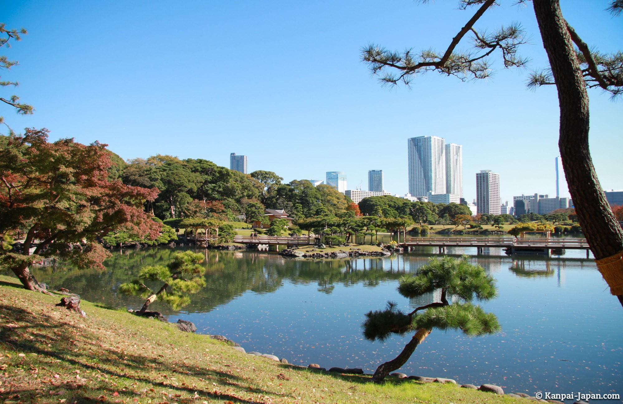 The Japanese Garden Between Tokyo Buildings