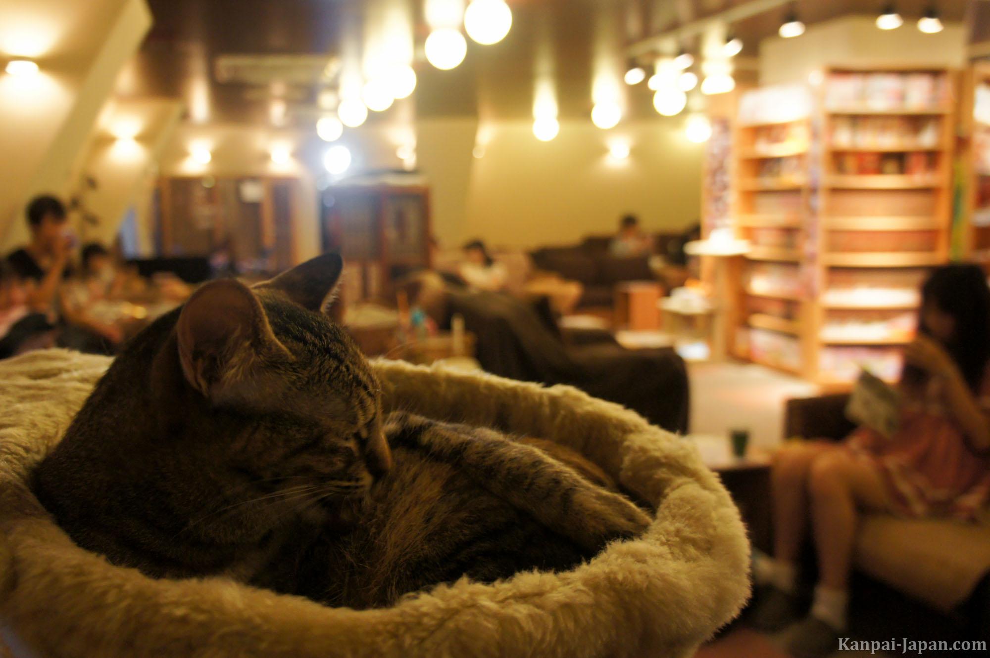 Neko Cafe A Cat Experience In Japan