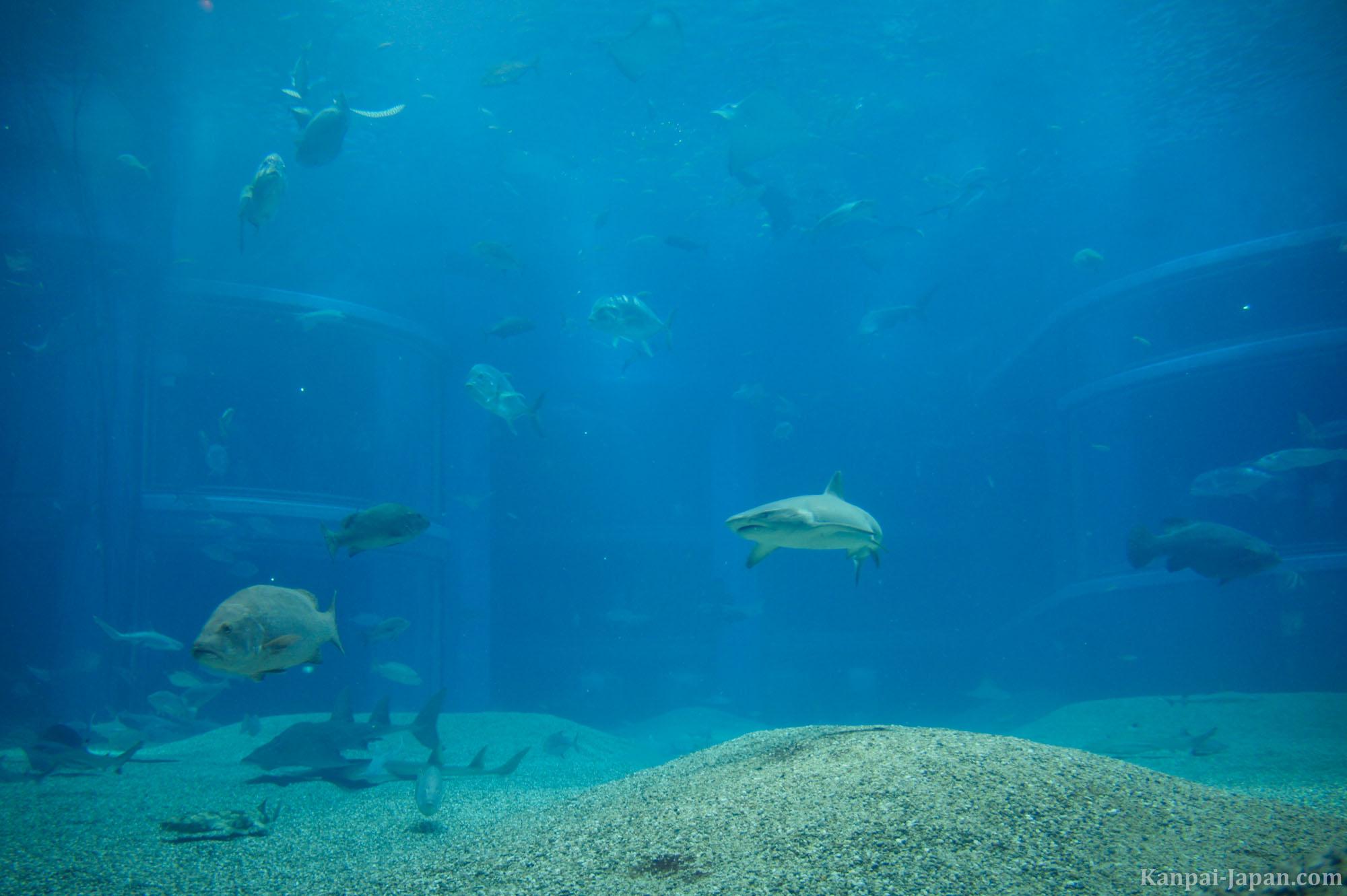 Kaiyukan aquarium the vertical tank with its whale shark for Site aquarium