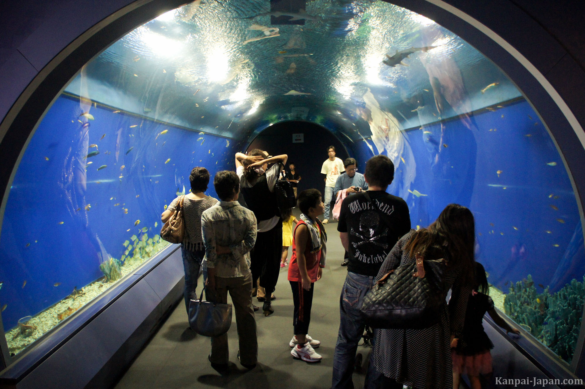 Fish tank japan - Kaiyukan Aquarium Photo Gallery