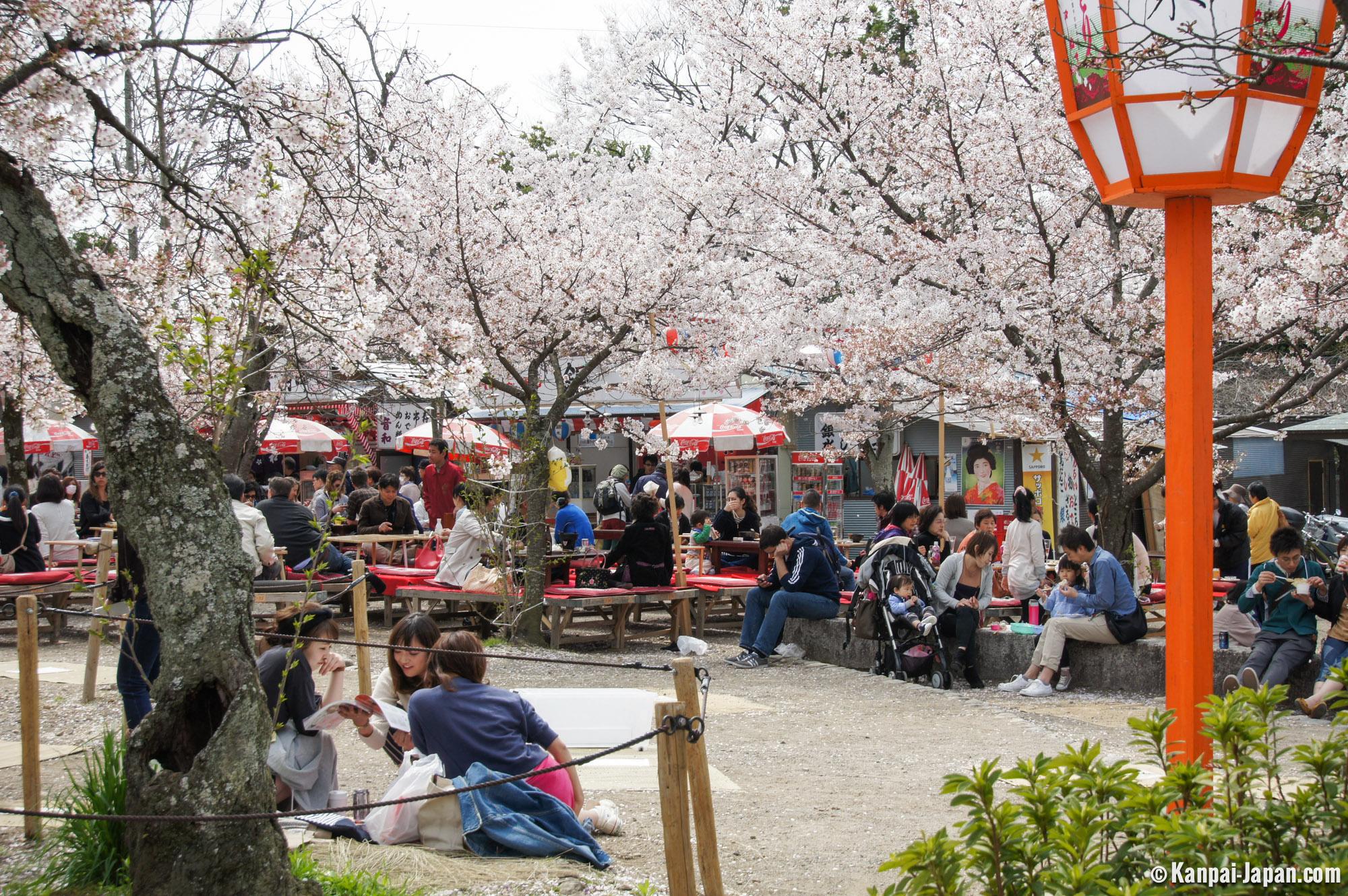 Maruyama Park The Big Sakura Public Garden In Kyoto