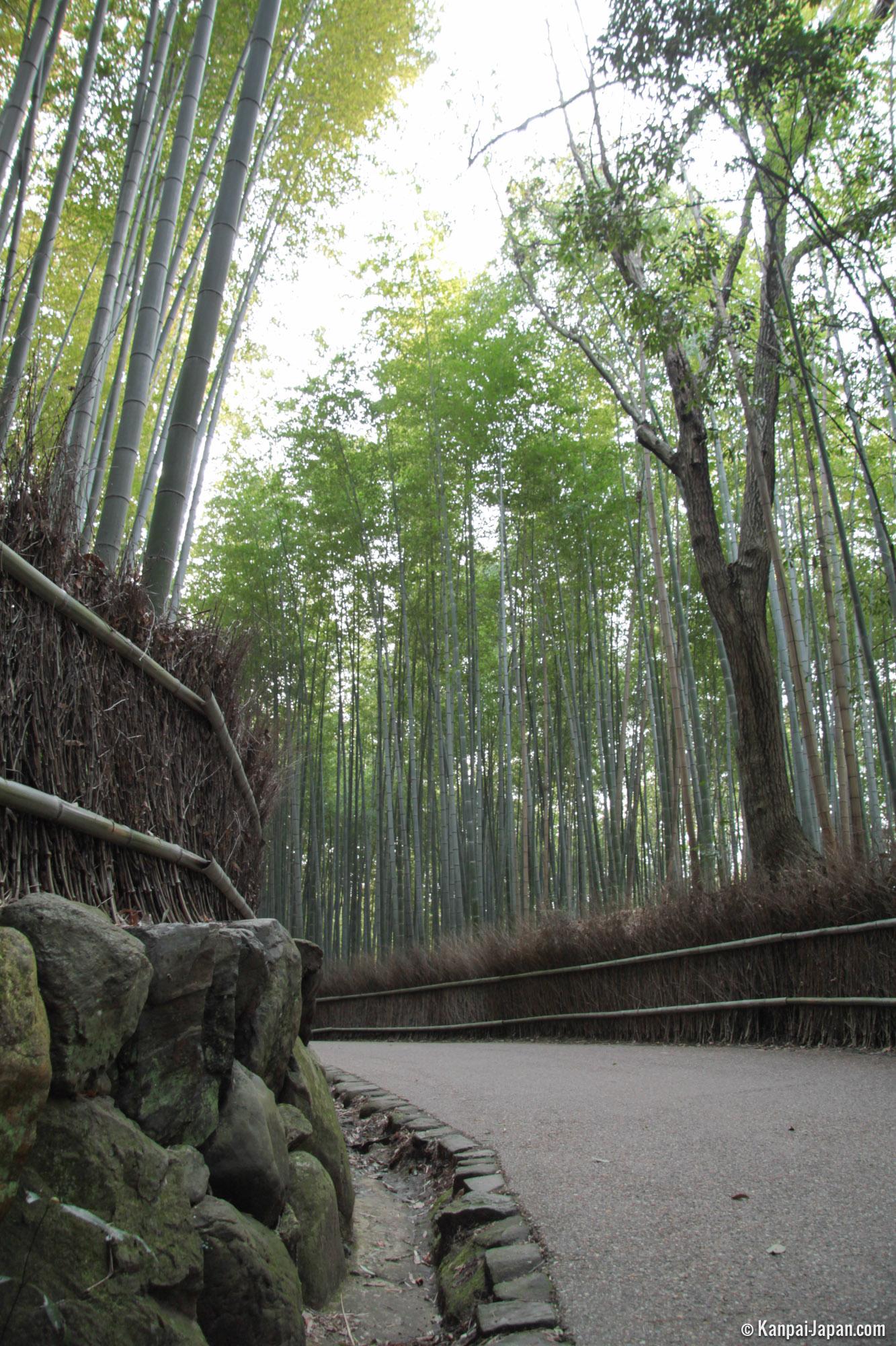 arashiyama bamboo grove the sagano bamboo forest in kyoto